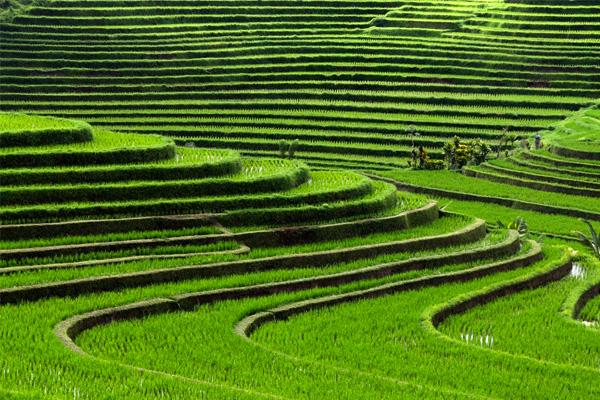 Happy Trail Asia