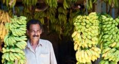 banana-sales-men